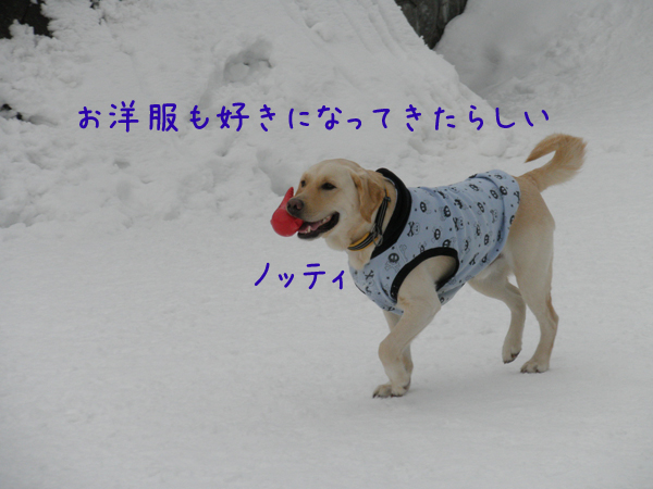 notei_20120206212900.jpg
