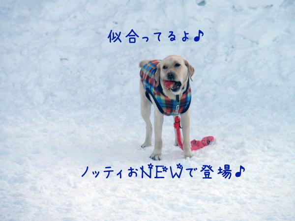 notei_20120208203452.jpg