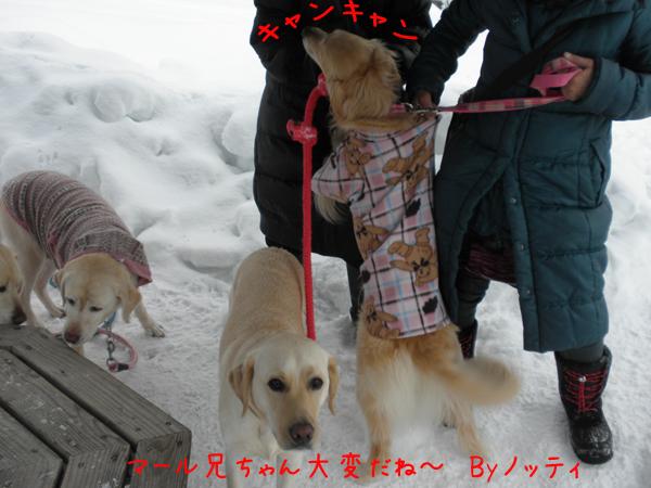 notei_20120211212145.jpg