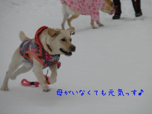noteihasiru_20120121234321.jpg