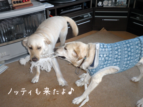 noteimaru_20111211212651.jpg