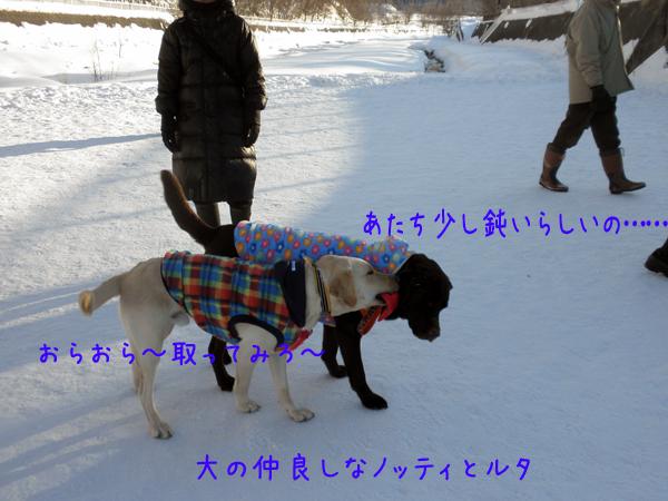 noteiruta_20120209212236.jpg