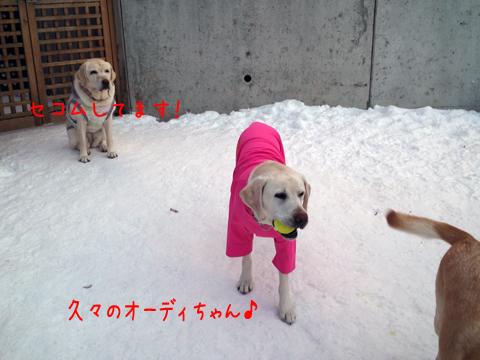ody_20111218202907.jpg