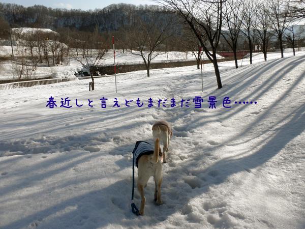 sanpo1_20120311203639.jpg