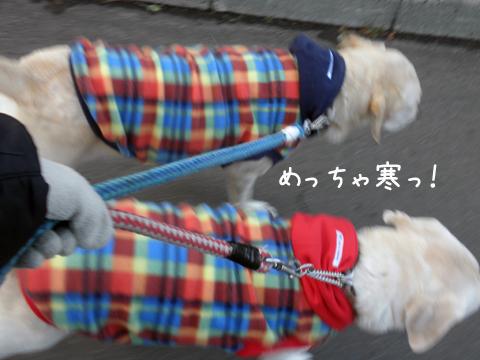 sanpo_20111124174134.jpg