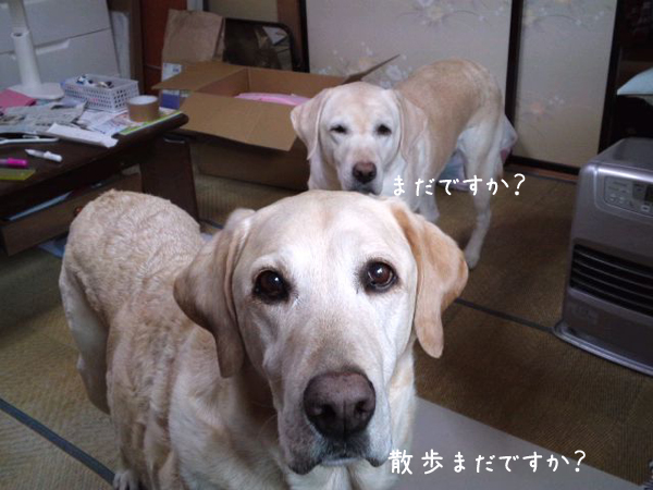 sanpo_20120312234441.jpg