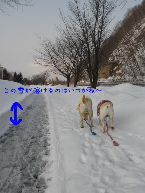 sanpo_20120322212607.jpg