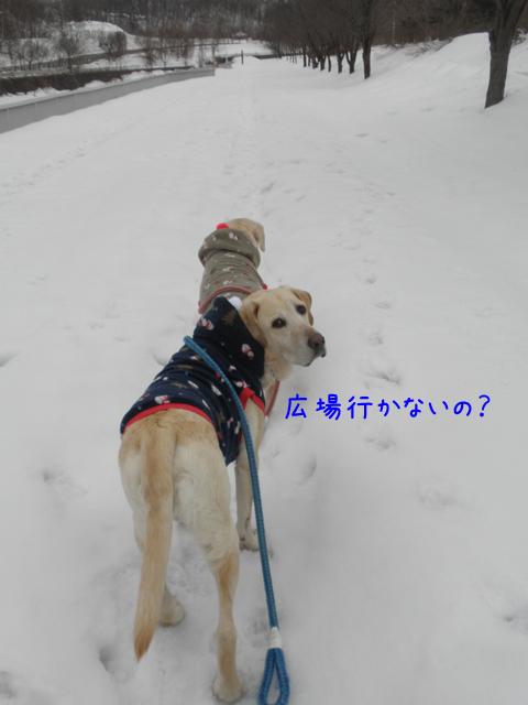 sanpo_20120323211749.jpg