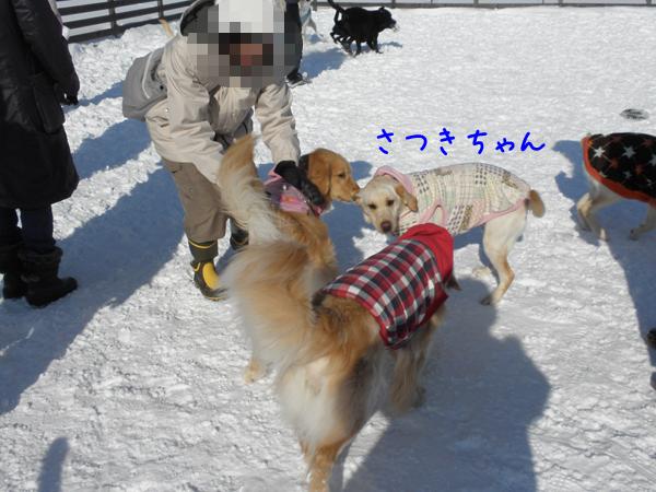 satukiai_20120126213934.jpg