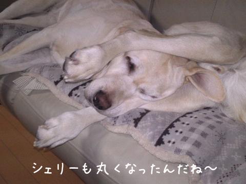 sofa1_20111211221407.jpg