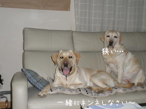 sofa1_20120122000052.jpg