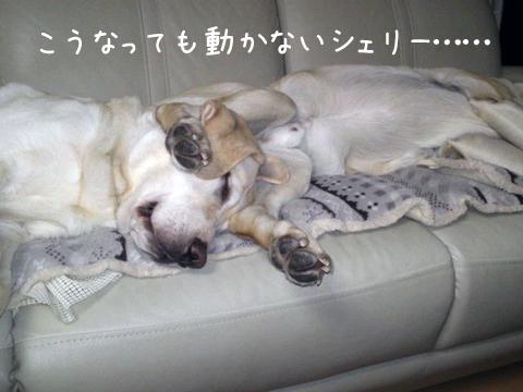 sofa2_20111211221408.jpg