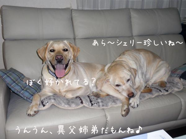 sofa2_20120122000411.jpg