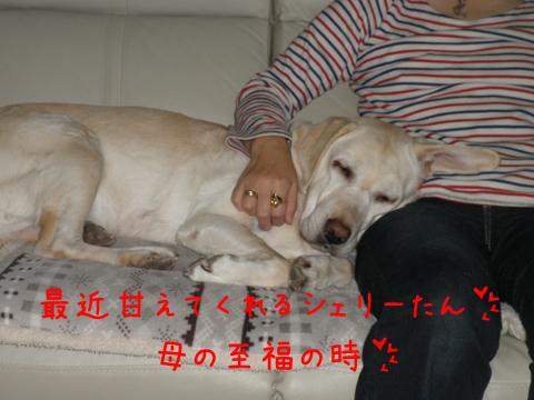 sofa_20111216220511.jpg