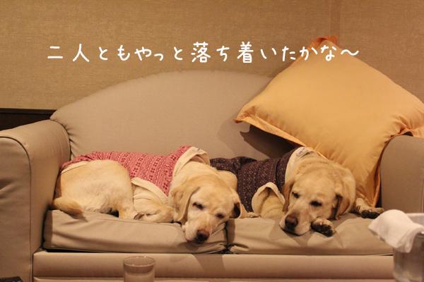 sofa_20120117145744.jpg