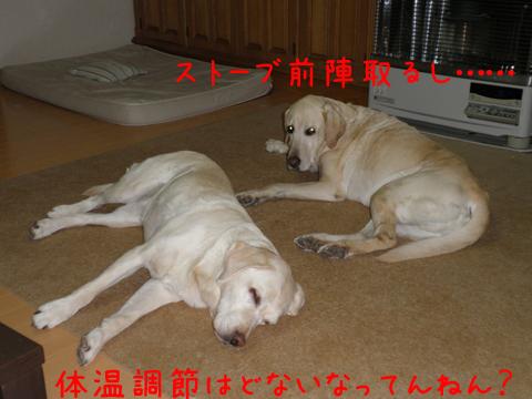 sutoubu_20111214223504.jpg