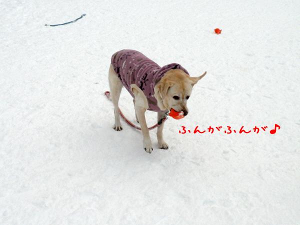 syeri1_20111231231030.jpg