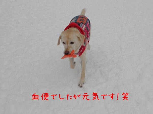 syeri2_20111230220057.jpg