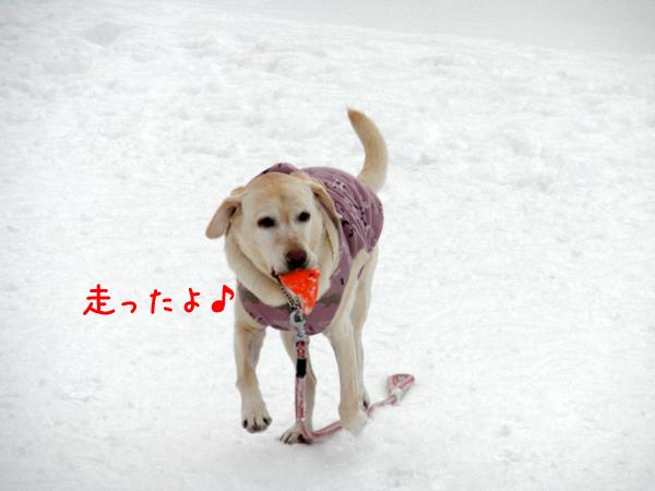 syeri2_20111231231029.jpg
