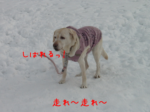 syeri_20111215211145.jpg