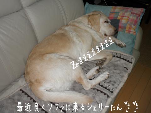 syeri_20111226221316.jpg