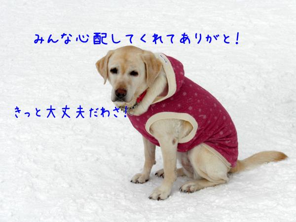 syeri_20120128220443.jpg