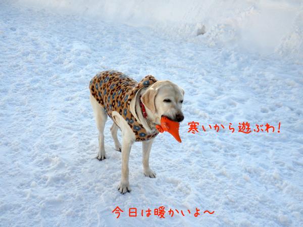 syeri_20120222205426.jpg