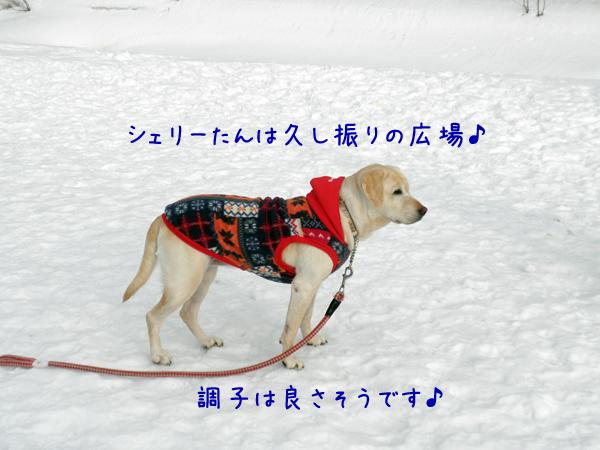syeri_20120302212912.jpg