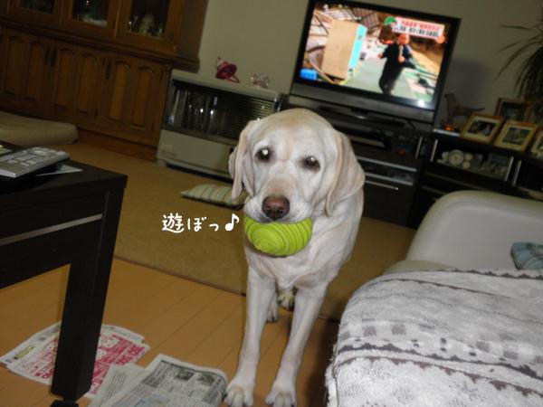 syeriball_20120404001147.jpg