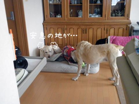 syeribed_20111205220427.jpg