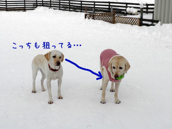 syeritubomi_20120109210712.jpg