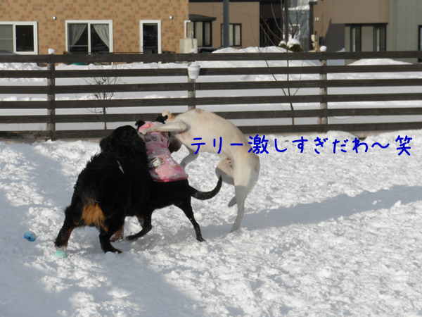 terihihumi_20120109211258.jpg