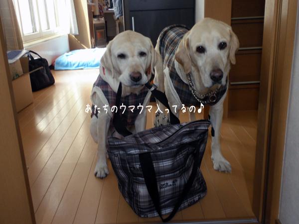 umauma_20120305113744.jpg