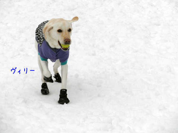viri_20120301211212.jpg
