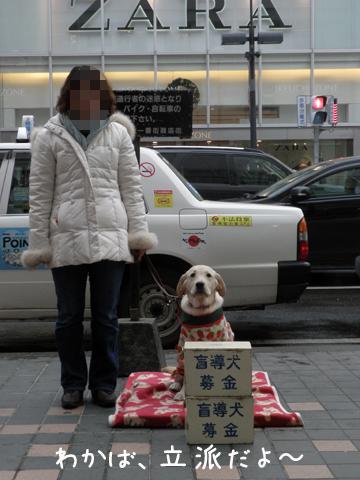 wakaba1_20111210224654.jpg