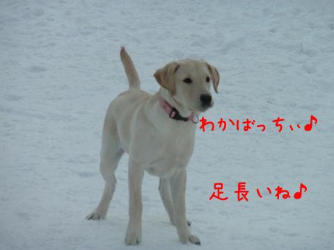 wakaba2_20111215211707.jpg