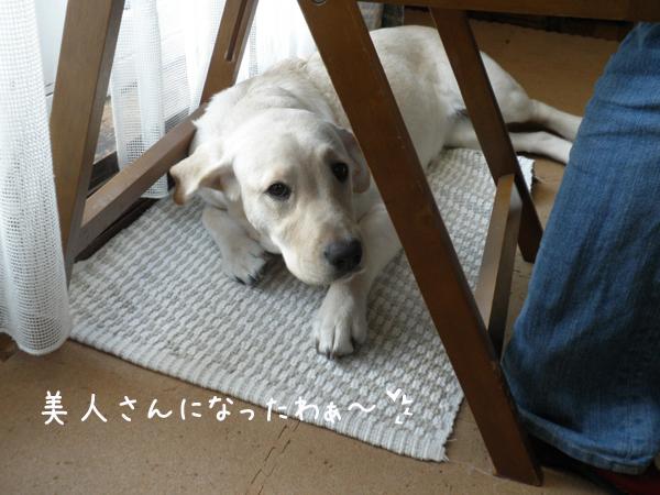 wakaba2_20120124203633.jpg