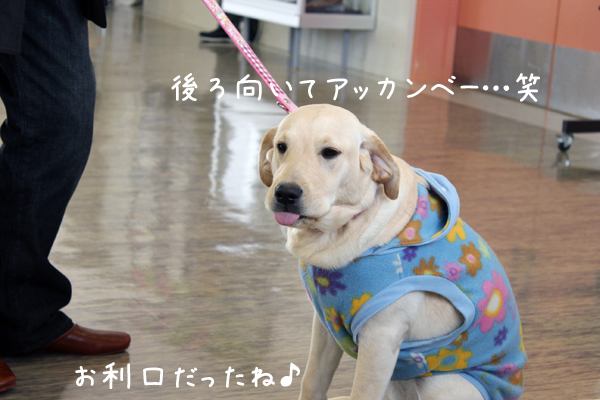 wakaba3_20120129221112.jpg