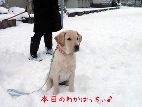 wakaba_20111122200329.jpg