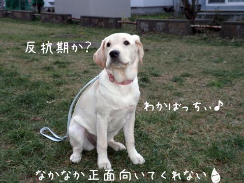 wakaba_20111124174548.jpg