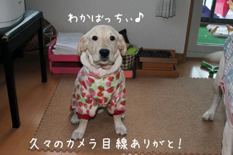 wakaba_20111207213653.jpg