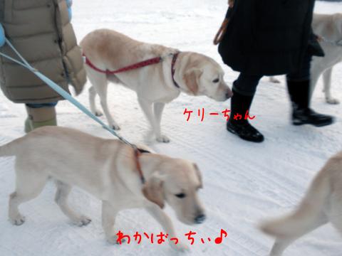 wakaba_20111209212946.jpg