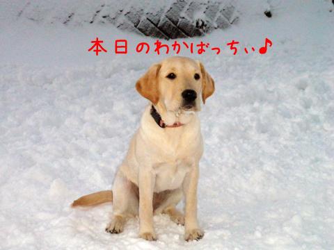 wakaba_20111212175420.jpg
