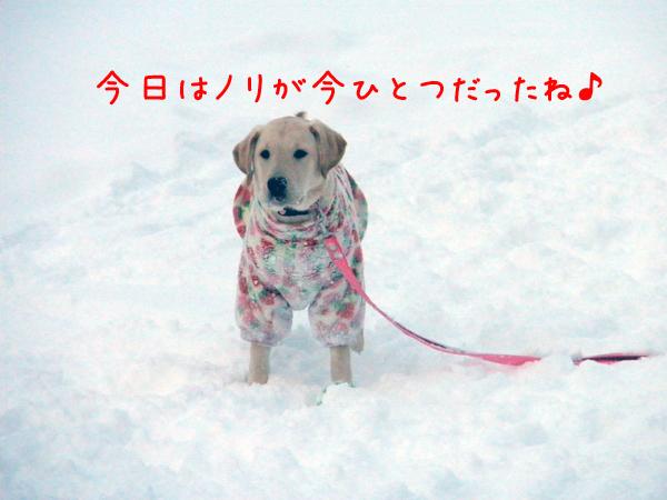 wakaba_20111229213904.jpg