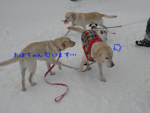 wakabasyeri_20120103203516.jpg