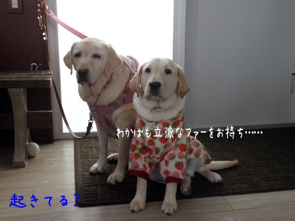wakabasyeri_20120105210509.jpg