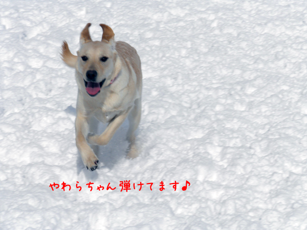 yawarahazikeru.jpg