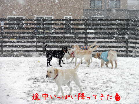 yuki_20111201213811.jpg