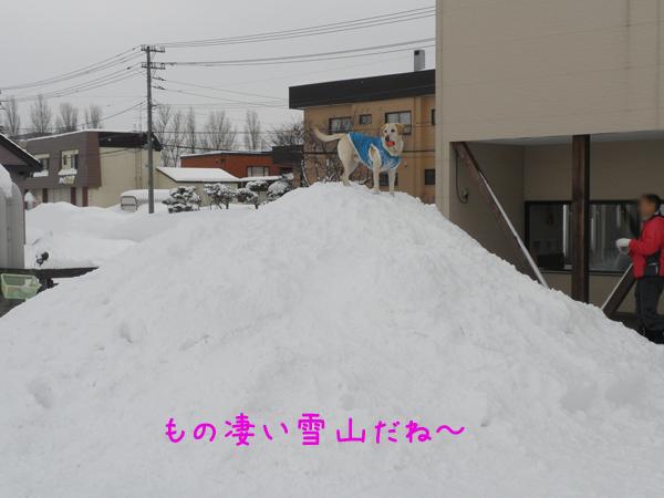 yukiyama_20120204203751.jpg