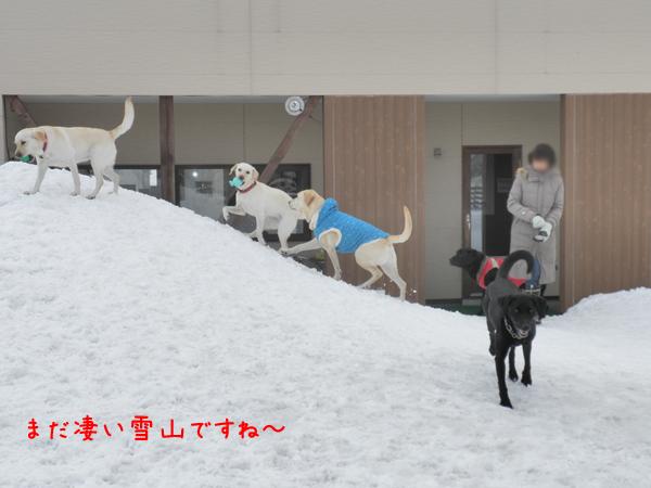 yukiyama_20120315193545.jpg
